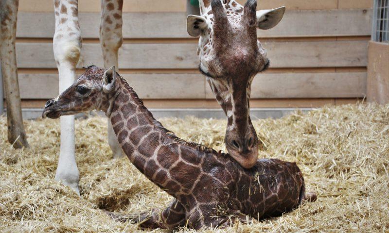 Foto: Odense Zoo